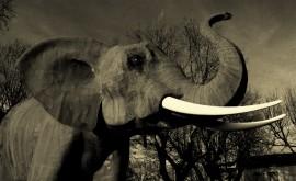 elephant-huet-3
